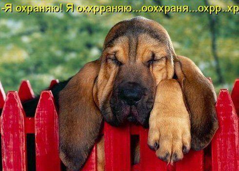 Прикольные картинки собак с надписью - 24 фото (12)