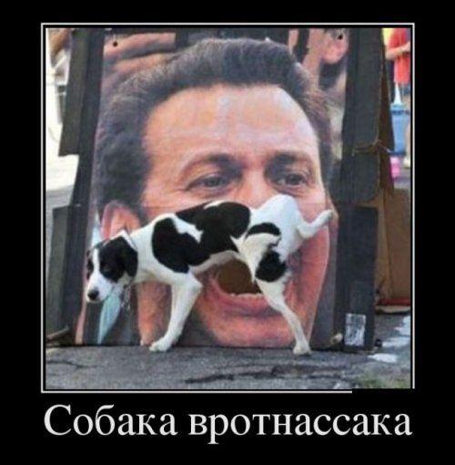Прикольные картинки собак с надписью - 24 фото (13)
