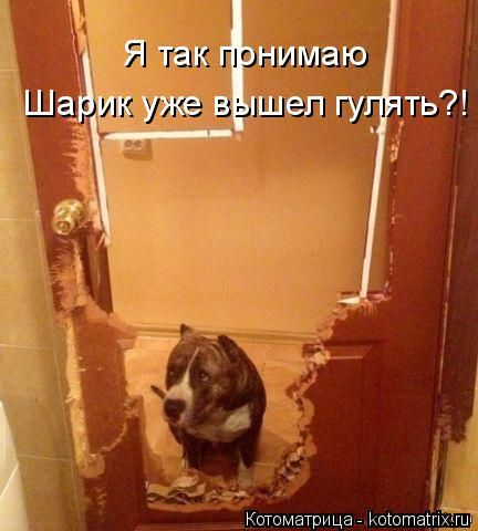 Прикольные картинки собак с надписью - 24 фото (14)