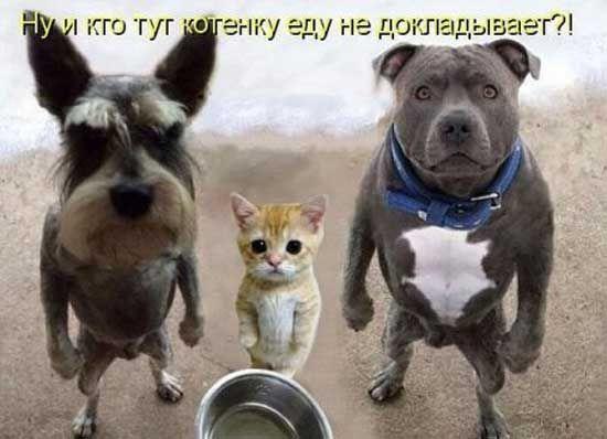 Прикольные картинки собак с надписью - 24 фото (17)