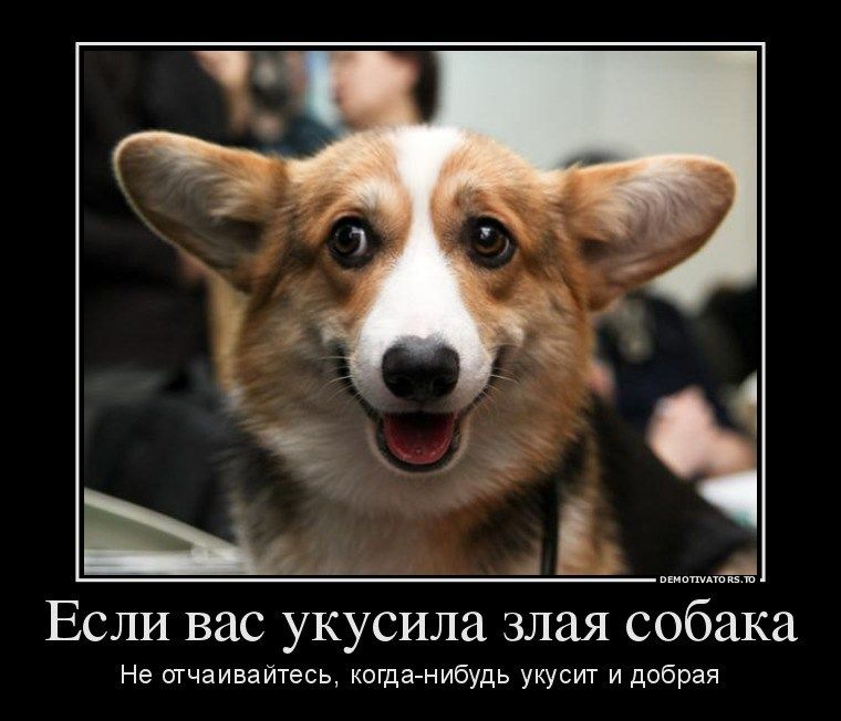 Прикольные картинки собак с надписью - 24 фото (2)