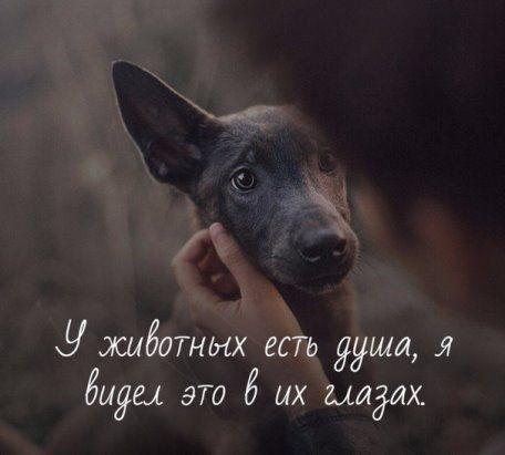Прикольные картинки собак с надписью - 24 фото (22)