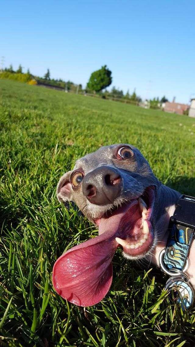 Прикольные картинки собак с надписью   24 фото (25)
