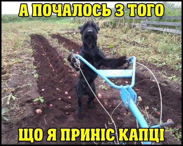 Прикольные картинки собак с надписью - 24 фото (28)