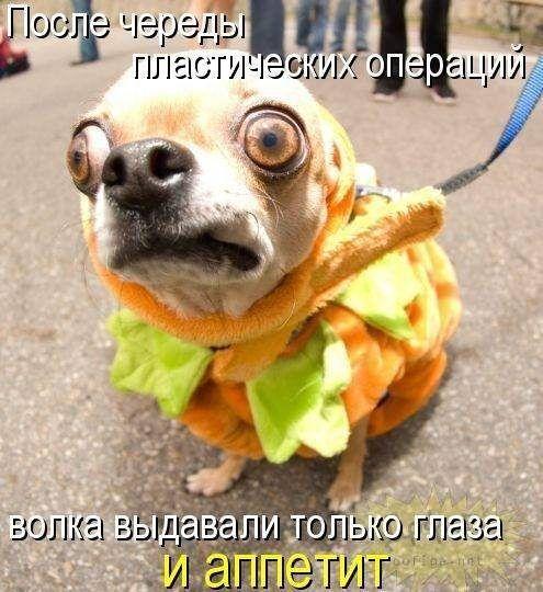 Прикольные картинки собак с надписью - 24 фото (3)
