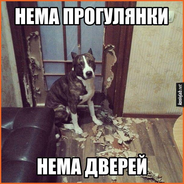 Прикольные картинки собак с надписью - 24 фото (30)