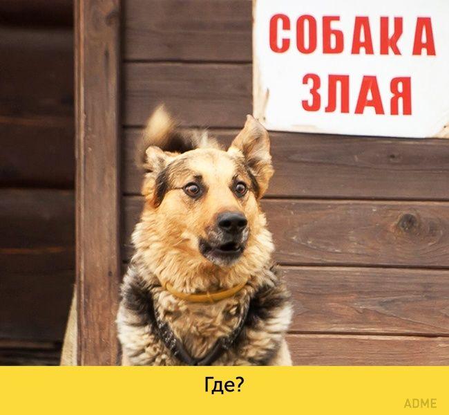Прикольные картинки собак с надписью - 24 фото (4)