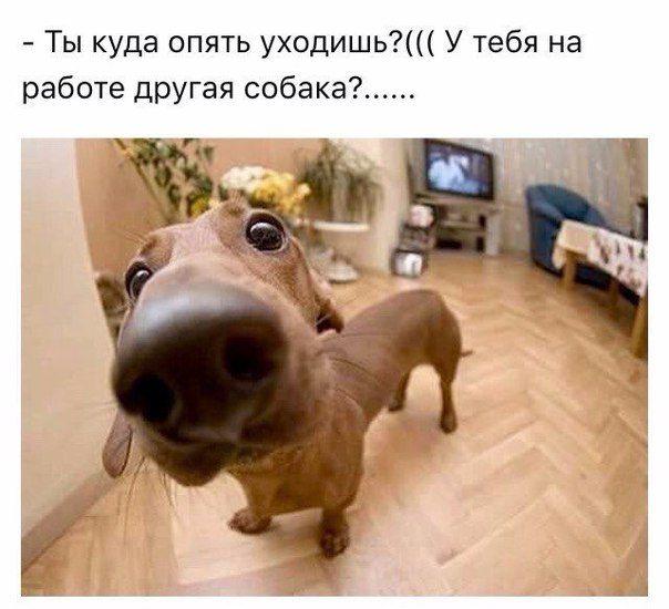 Прикольные картинки собак с надписью - 24 фото (7)