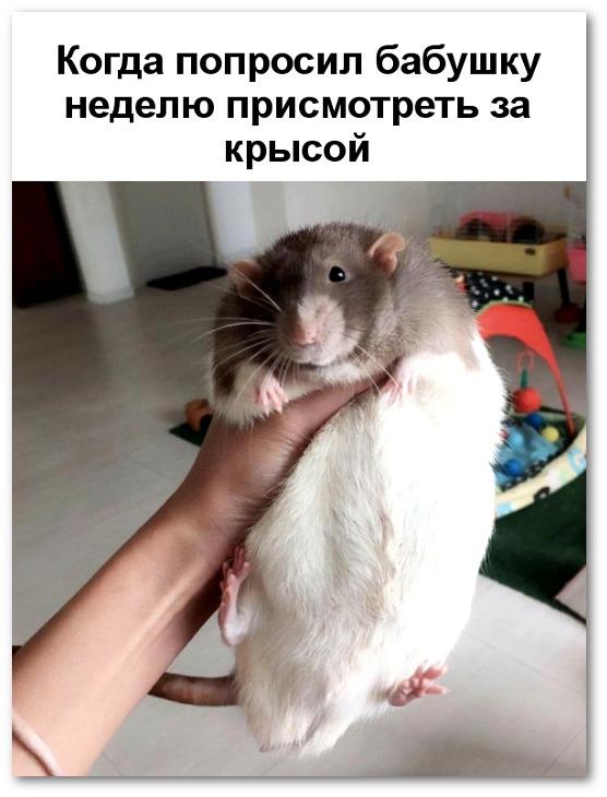 Прикольные картинки толстых людей и животных (13)