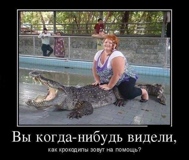Прикольные картинки толстых людей и животных (2)