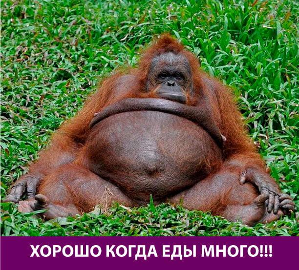 Прикольные картинки толстых людей и животных (3)