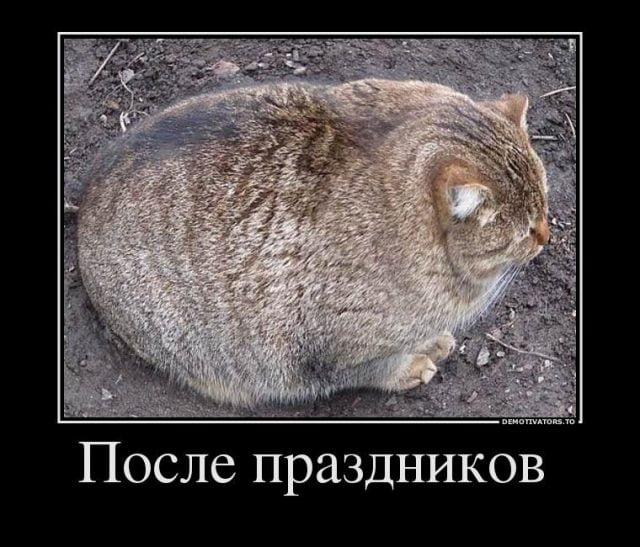 Прикольные картинки толстых людей и животных (4)