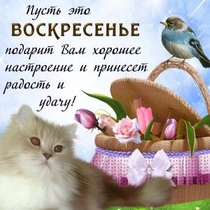 Приятного воскресенья картинки и открытки008