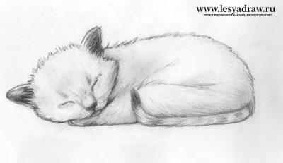 Рисунки карандашом для начинающих для девочек 11 лет017