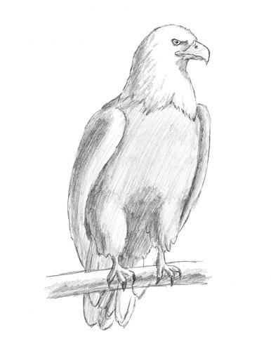 Рисунки на свободную тему 6 класс карандашом - идеи (17)