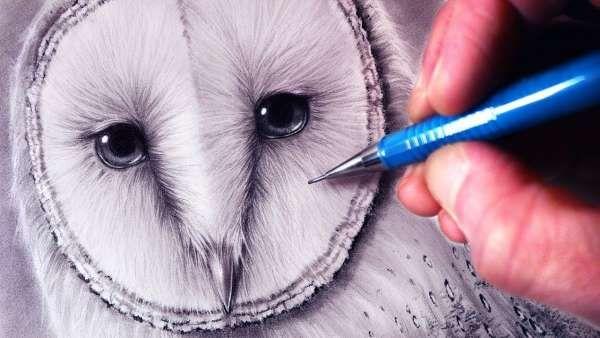 Рисунки совы красками смешные и веселые (1)