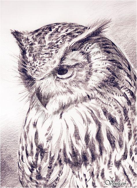 Рисунки совы красками смешные и веселые (12)