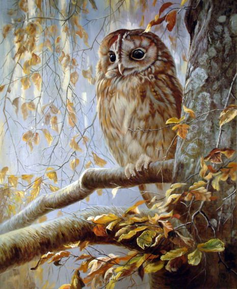 Рисунки совы красками смешные и веселые (17)