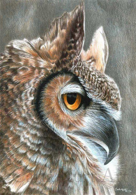 Рисунки совы красками смешные и веселые (9)