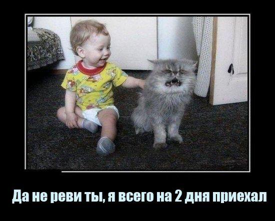 Самые смешные картинки кошек и собак - 29 фото (1)
