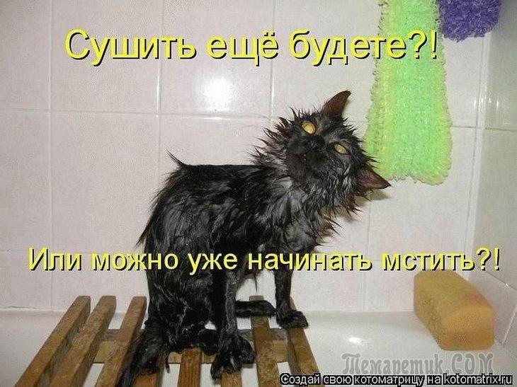 Самые смешные картинки кошек и собак - 29 фото (10)