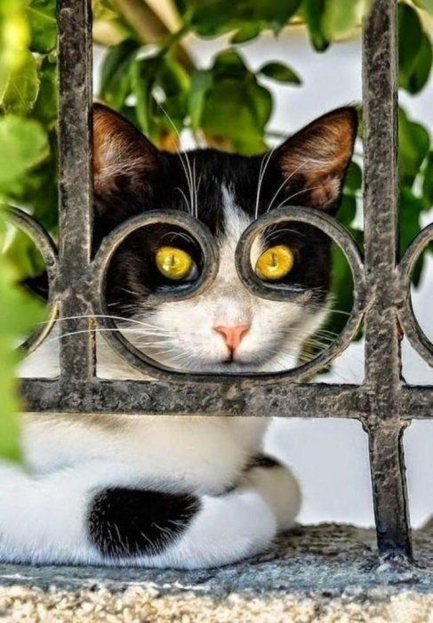 Самые смешные картинки кошек и собак - 29 фото (11)