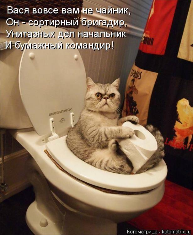 Самые смешные картинки кошек и собак - 29 фото (12)