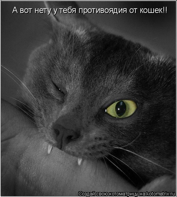 Самые смешные картинки кошек и собак - 29 фото (14)