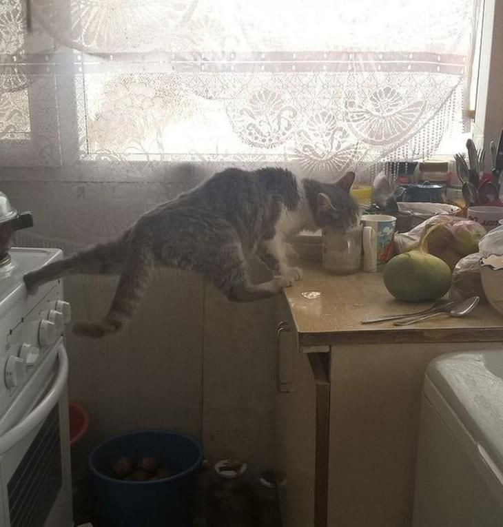 Самые смешные картинки кошек и собак - 29 фото (18)