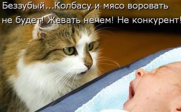Самые смешные картинки кошек и собак - 29 фото (2)