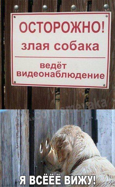 Самые смешные картинки кошек и собак - 29 фото (21)