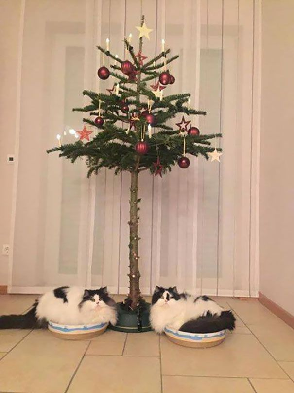 Самые смешные картинки кошек и собак - 29 фото (23)