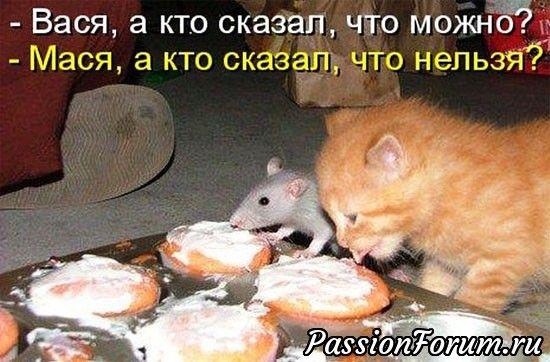 Самые смешные картинки кошек и собак - 29 фото (25)