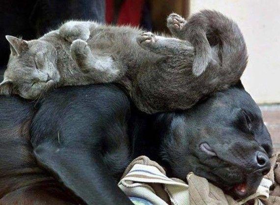 Самые смешные картинки кошек и собак - 29 фото (26)