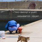 Самые смешные картинки кошек и собак — 29 фото