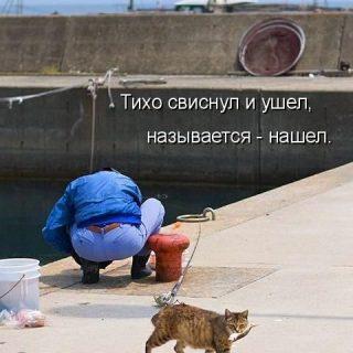Самые смешные картинки кошек и собак   29 фото (28)