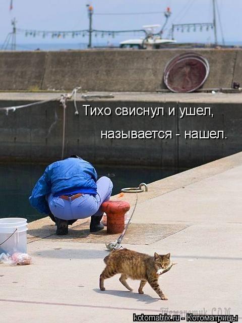 Самые смешные картинки кошек и собак - 29 фото (28)