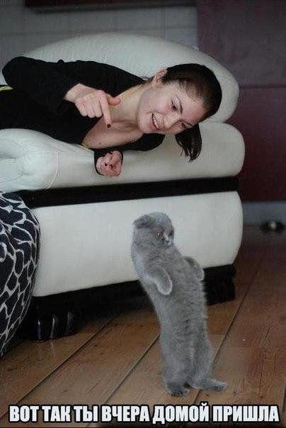 Самые смешные картинки кошек и собак - 29 фото (3)