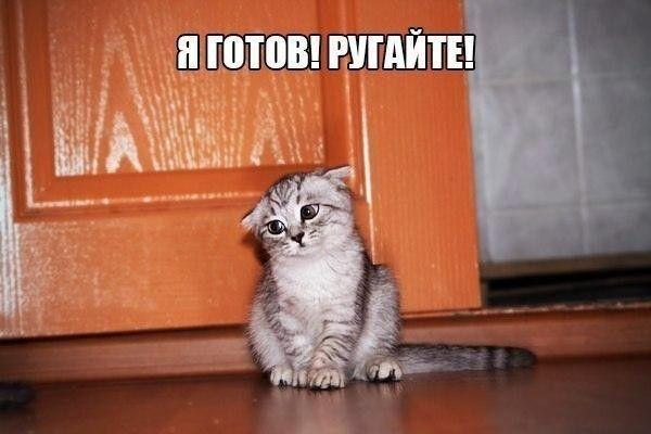 Самые смешные картинки кошек и собак - 29 фото (4)
