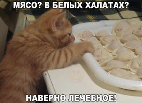 Самые смешные картинки кошек и собак - 29 фото (5)