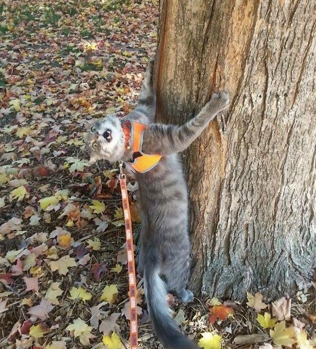 Самые смешные картинки кошек и собак - 29 фото (6)
