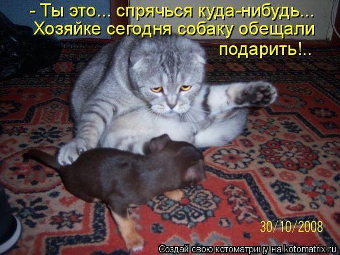 Самые смешные картинки кошек и собак - 29 фото (9)
