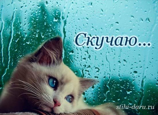 Лучший, картинки кошечки с надписями скучаю