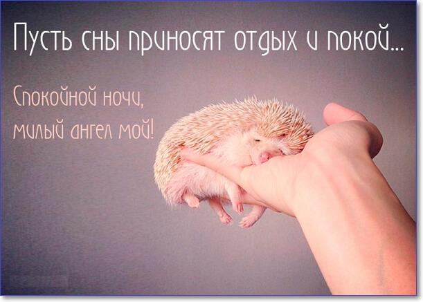 Сладких снов ангел мой картинки и открытки (1)