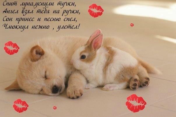 Сладких снов ангел мой картинки и открытки (8)
