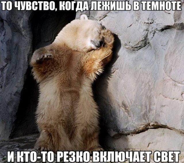 Смешные картинки про животных с надписью для ржача (1)