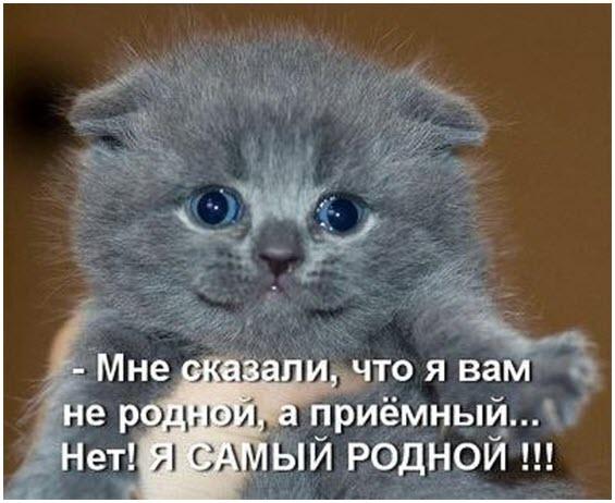 Смешные картинки про животных с надписью для ржача (10)