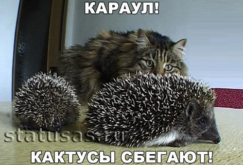 Смешные картинки про животных с надписью для ржача (12)