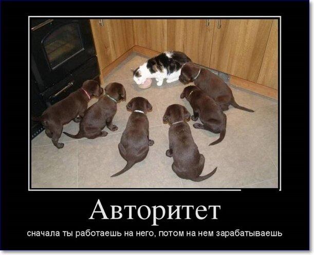 Смешные картинки про животных с надписью для ржача (13)