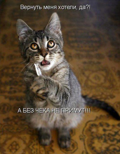 Смешные картинки про животных с надписью для ржача (14)